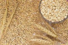 L'avena del grano, avena si sfalda in una scatola, orzo dei ramoscelli Fotografia Stock Libera da Diritti