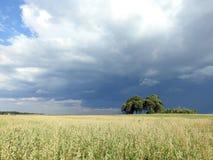 L'avoine met en place et beau ciel nuageux, Lithuanie Photographie stock