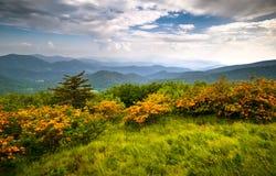L'azalea della fiamma fiorisce montagne di Ridge blu Immagine Stock