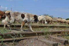 L'Azerbaigian, Bacu fotografie stock