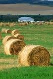 l'azienda agricola accatasta la paglia Fotografia Stock