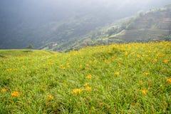 L'azienda agricola daylilyTawny arancio del fiore dell'emerocallide a Taimali Immagine Stock
