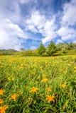 L'azienda agricola daylilyTawny arancio del fiore dell'emerocallide a Taimali Fotografia Stock Libera da Diritti