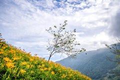 L'azienda agricola daylilyTawny arancio del fiore dell'emerocallide a Taimali Fotografie Stock Libere da Diritti