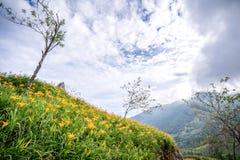 L'azienda agricola daylilyTawny arancio del fiore dell'emerocallide a Taimali Fotografie Stock