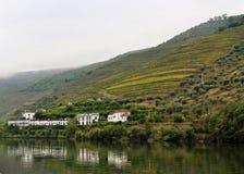 L'azienda agricola del vino sulla sponda del fiume Fotografia Stock