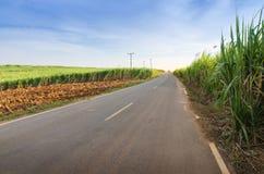 L'azienda agricola tropicale dell'agricoltura del giacimento della canna da zucchero e della strada abbellisce Fotografia Stock
