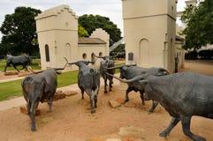 L'azionamento del bestiame di Waco Fotografie Stock