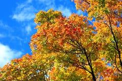 l'azzurro di autunno lascia il cielo Immagine Stock Libera da Diritti