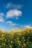 l'azzurro fiorisce i cieli nell'ambito del colore giallo Fotografia Stock
