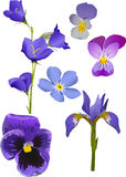 L'azzurro fiorisce l'accumulazione isolata su bianco illustrazione vettoriale