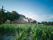 L casa dos fazendeiros do OM do ` com milho coloca fotografia de stock royalty free