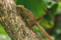 L'?cureuil a grimp? ? l'arbre dans le jardin photo libre de droits