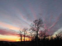L'or de rose de ciel de coucher du soleil d'hiver opacifie des arbres de silhouette image stock