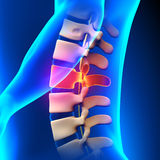 L2 Disc - Lumbar Spine Royalty Free Stock Images