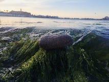 l'eau éclaboussant une roche Photo libre de droits