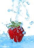 L'eau étant plue à torrents dedans une fraise d'isolement photo libre de droits