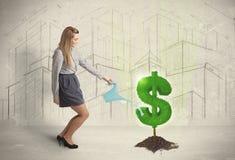 L'eau étudiante à fond de femme d'affaires sur l'arbre du dollar se connectent le backgrou de ville Photographie stock libre de droits