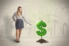 L'eau étudiante à fond de femme d'affaires sur l'arbre du dollar se connectent le backgrou de ville Image stock
