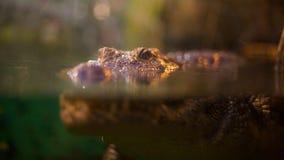 On/in l'eau photographie stock libre de droits