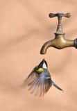L'eau. Photo stock