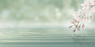 L'eau abstraite de fond de Bokeh avec des feuilles et des fleurs d'usine de fleur Photographie stock libre de droits