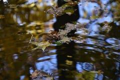 L'eau avec des feuilles images stock