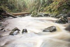 L'eau blanche de mouvement liquide entrant dans le lit de la rivière à la forêt du nord-ouest Pacifique Image stock