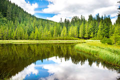 L'eau bleue dans un lac de forêt Image stock
