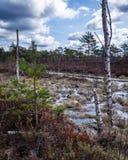 L'eau bleue de marais, les arbres morts sont évidente à proximité Images stock
