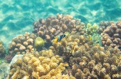 L'eau bleue de turquoise et récif coralien Photo sous-marine d'habitant tropical de bord de la mer Image stock