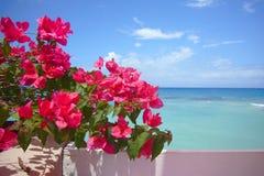 L'eau, ciel et fleurs Images libres de droits