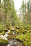 L'eau circulant sur des pierres envahies avec de la mousse Un flot de montagne Photo stock