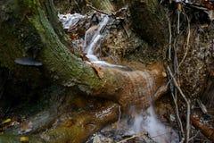L'eau circulant sur le tronc d'arbre Photos stock