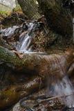 L'eau circulant sur le tronc d'arbre Photo libre de droits