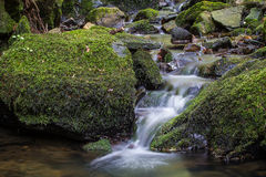 L'eau circulant sur les roches couvertes de mousse Images stock