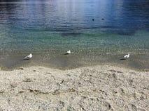 L'eau clair comme de l'eau de roche de turquoise de bord de mer de Queenstown le jour ensoleillé images stock