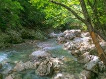 L'eau clair comme de l'eau de roche en montagnes, courant de montagne dans la forêt photo libre de droits