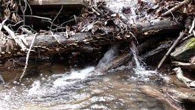 L'eau claire débordante par le pays large banque de vidéos