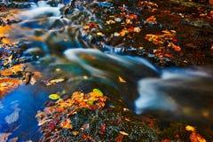 L'eau courante et les feuilles tombées photos libres de droits