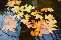 L'eau d'automne Photos stock