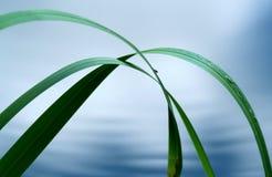l'eau d'herbe Photographie stock libre de droits