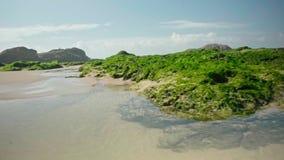 L'eau d'océan avec des algues et des roches banque de vidéos