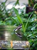 l'eau d'oiseau Photos libres de droits