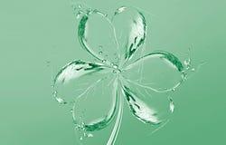l'eau d'oxalide petite oseille Photo stock