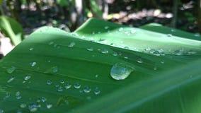 l'eau dans des feuilles, foyer dans les taches arrosent, belle vue photos stock