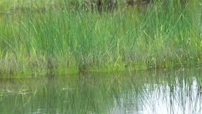 L'eau dans le marais clips vidéos