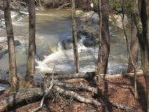 L'eau dans les bois Images libres de droits