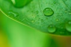 L'eau de baisses sur le vert part du fond Images libres de droits