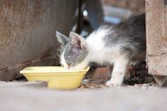 L'eau de boissons de chatons de rue d'un arc en plastique Photos libres de droits